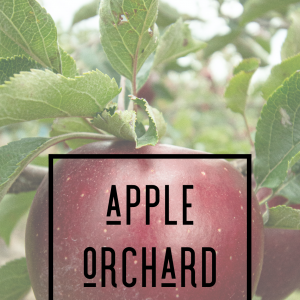 Apple Orchard - Hand Made Cold Process Soap - Small Bar